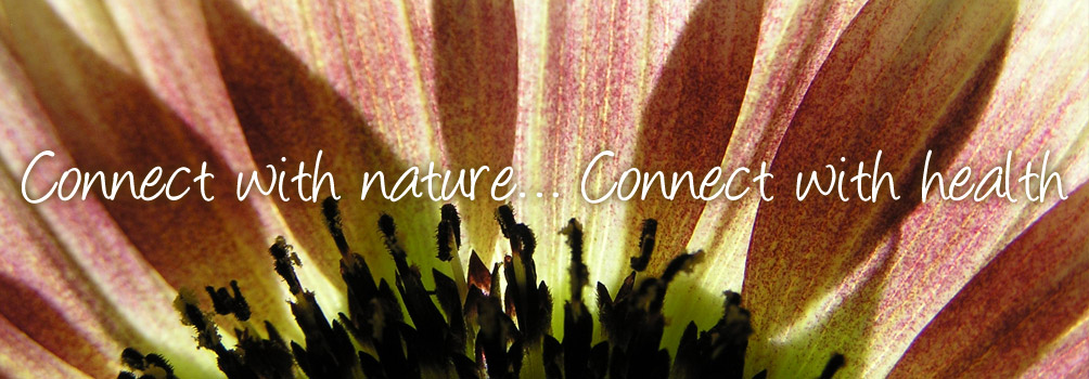 connection nature essay